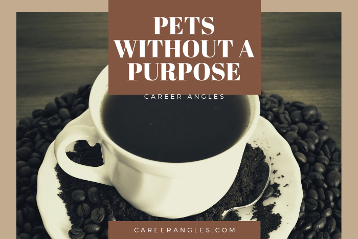 Pets Without aPurpose