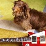 ミニ レスポール ギター