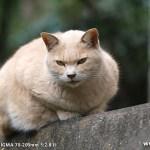 原宿野良猫日記-9