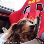 RZ 試運転