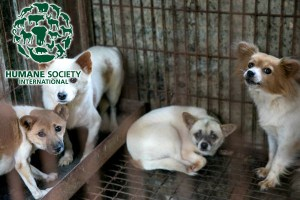 Dogs saved from North Korean dog meat farm by HSI