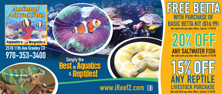 Animal Attraction Aquatics & Reptiles Coupons - Free Betta or 20% Off Saltwater Fish