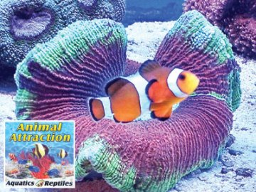 Animal Attraction Aquatics & Reptiles in Greeley, near Fort Collins, CO
