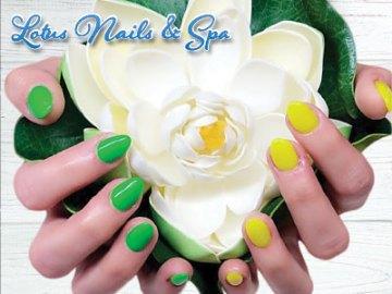 Lotus Nails & Spa, Windsor, CO