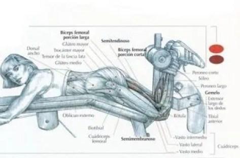 curl-piernas