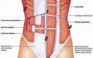 musculosabdominales