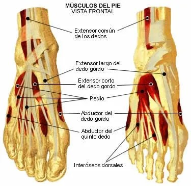 dolor en los dedos del pie al correr