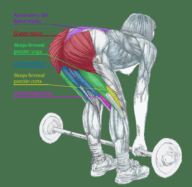 ejercicios para fortalecer los glúteos