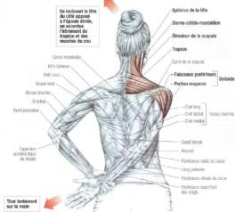 ejercicios para estirar el trapecio
