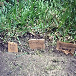 Impromptu Insect graves :)