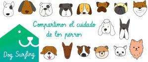 diseño web red social dogsurfing