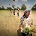 BioChica's 500 Words | GMOs: why do I care and why do I blog?