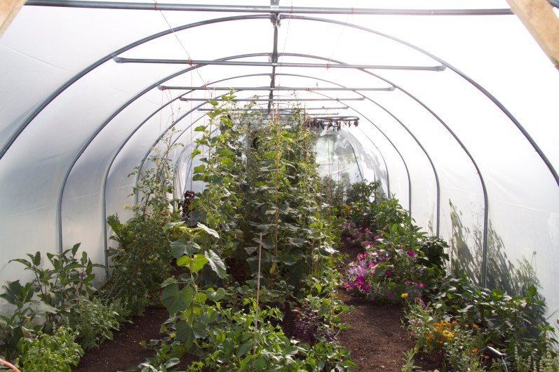 The polytunnel in August, 5 months after putting it up