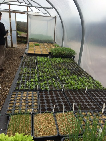 Module trays of spring plants