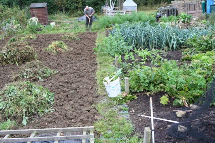 My neighbour's dug allotment on the left - my plot is to the right of his grass path