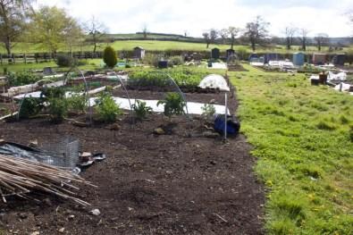 April 2016, weedy plot on right