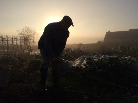 Allotment morning