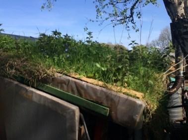 living green roof