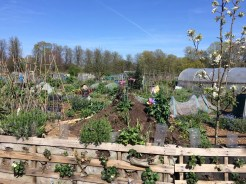 Riverside Community Gardens
