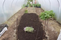 mulching the middle bed