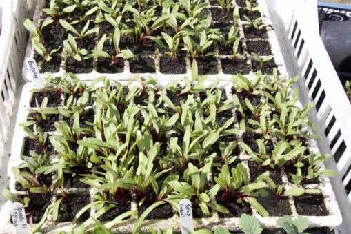module sown beetroot for Roth Bar & Grill