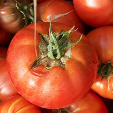 damaged tomatoes are still good to eat