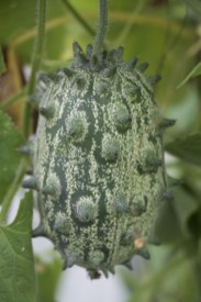 Kiwana fruit