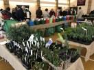 Pennard Plants Potato Day, Castle Cary