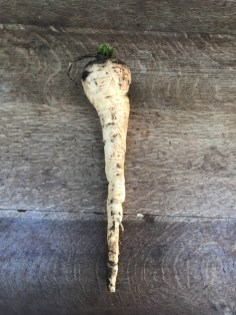 parsnip, grown on heavy clay