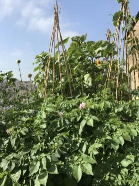 RBG kitchen garden