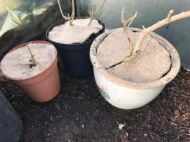 mulch mats on the pots