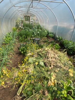 clearing the polytunnel