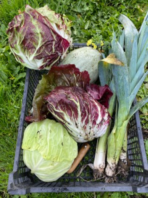 cabbage, radicchio, leeks and a squash that was missed from the big harvest from the allotment