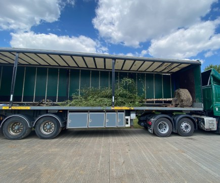 a tree is delivered