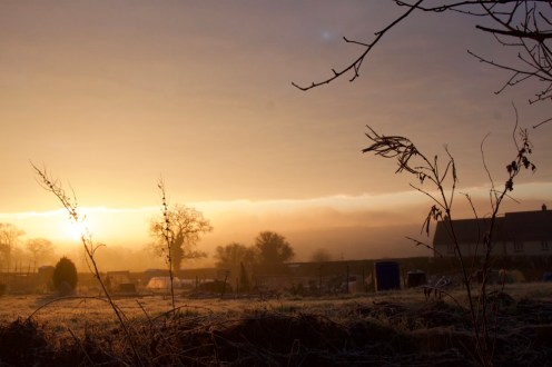 Dawn at the Bruton allotments
