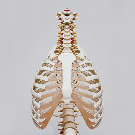 Unidad de Aprendizaje Anatomía y fisiología I