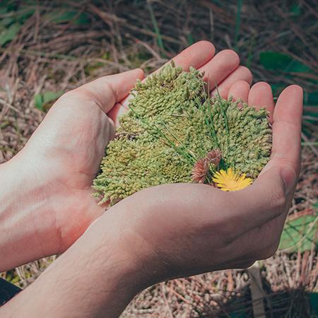 Curso Introducción al medio ambiente: Ecología y ecosistemas