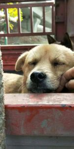 dog meat trade shut down china