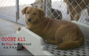 dog adoptions - end dog meat trade