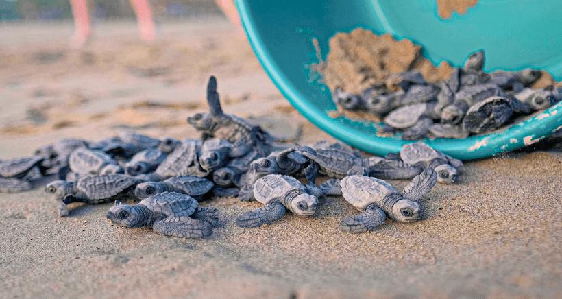 Descubre e inspírate con Ayotlcalli: Santuario de las Tortugas; el mini documental de David Muñiz