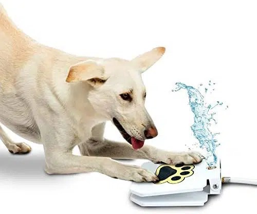 Outdoor Dog Water Fountain Automatic