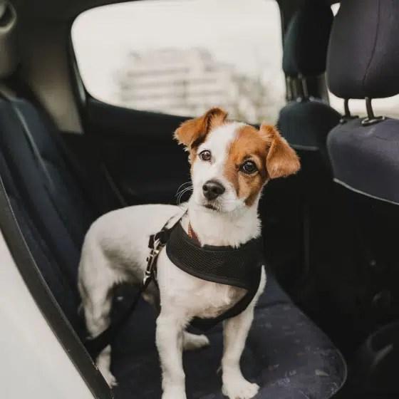 Dog Car Seatbelt
