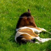 https://www.pexels.com/photo/animal-animal-photography-domestic-animal-field-449024/