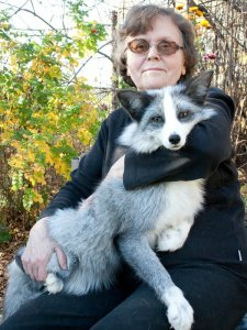 Lyudmila Trut with a domesticated fox