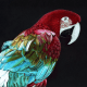 parrot, parrots, macaw, macaws, red and green, colorful, rainbow, black, full body, full-body, bird, birds, colored pencil, colored pencils, coloured pencil, coloured pencils, pencil crayon, pencil crayons, realism, realistic, animal, animals, wildlife, nature, noelle, noelle brooks, noellebrooks, noelle m brooks, noellembrooks, art, series, drawing, drawings, picture, pictures, illustration, illustrations, portrait,
