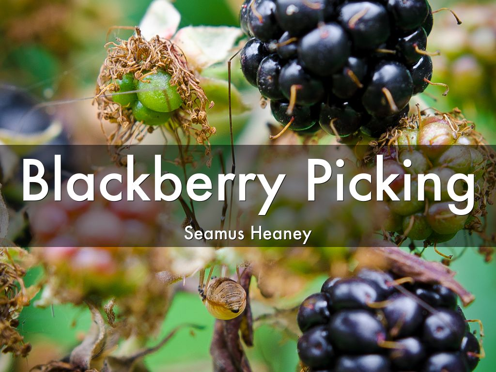 """Blackberry Picking"" by Seamus Heaney"