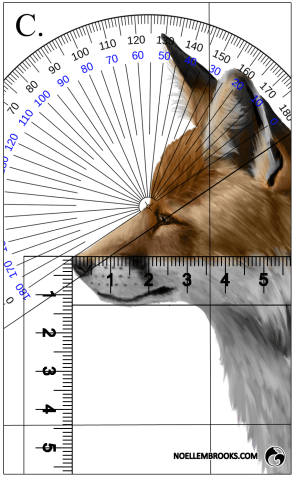 Red Fox Face Variation Calculations - C