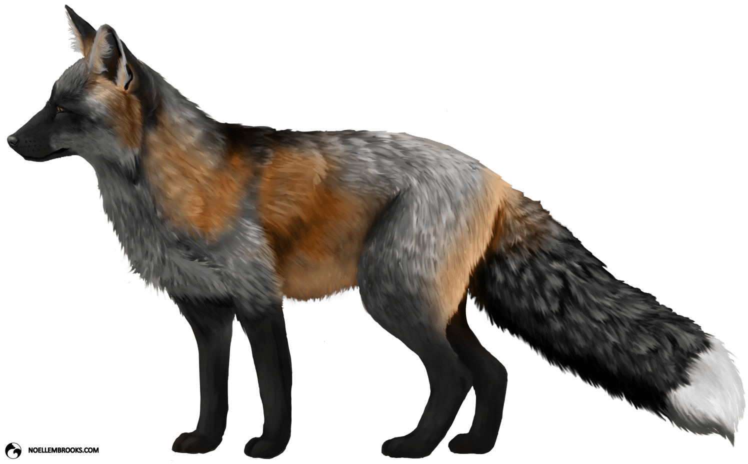 Swiper the Silver Cross-Colored Ranched Red Fox