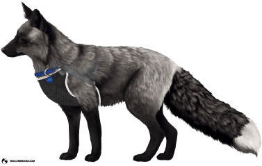 Vader the Silver-Colored Ranched Red Fox