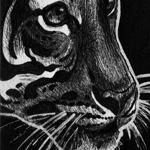 SwankyTiger174